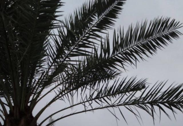 Kebun Kurma - Kecamatan Purwosari