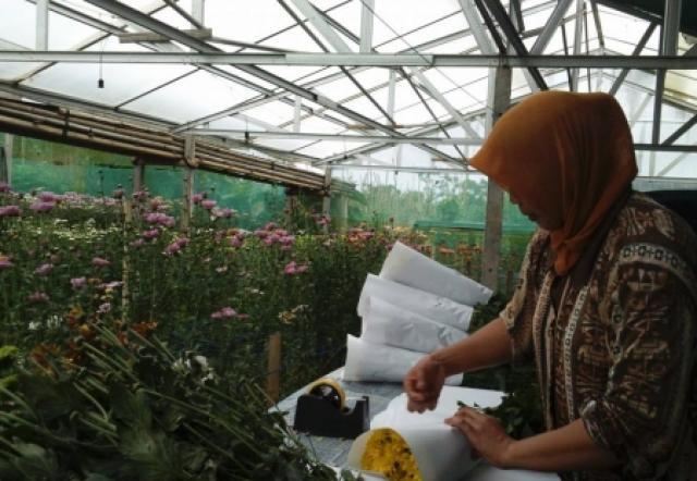 Kebun Krissan Greenhouse - Kecamatan Tutur