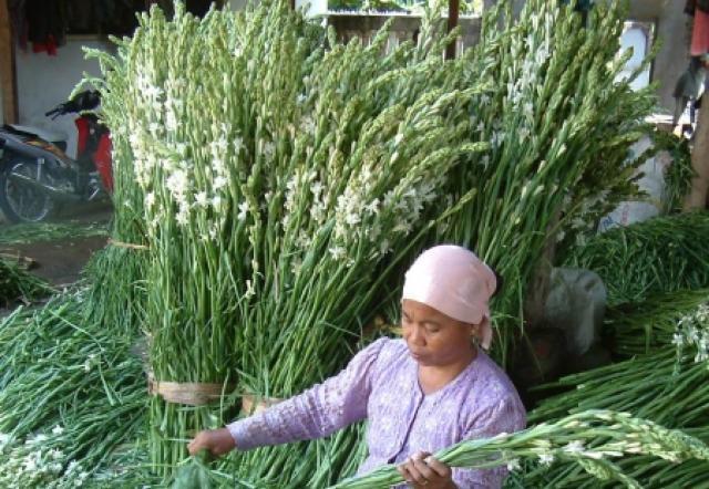 Sentra Bunga Sedap Malam, Kecamatan Rembang