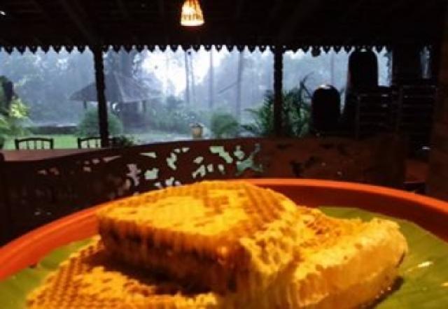Budidaya Lebah Madu - Kecamatan Prigen